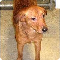 Adopt A Pet :: Puppy 3 - Irvington, KY