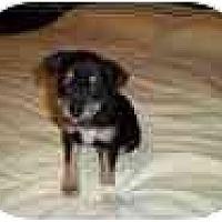 Adopt A Pet :: Annie Bell - Fostered in CT - Adamsville, TN