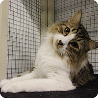 Adopt A Pet :: Giant - Mission, BC