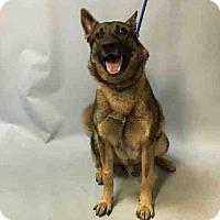 Adopt A Pet :: MANGO - Tully, NY