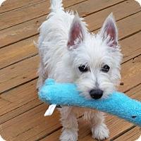 Adopt A Pet :: Lizzy-Pending Adoption - Omaha, NE