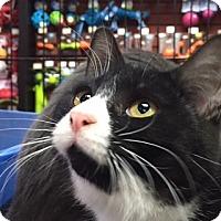 Adopt A Pet :: Trixie - Toronto, ON