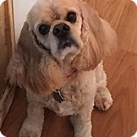 Adopt A Pet :: Sunnie - Sacramento, CA