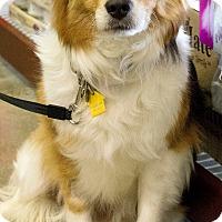 Adopt A Pet :: Andy-ADOPTED! - Sacramento, CA