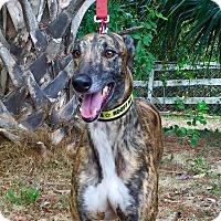 Adopt A Pet :: Cruise - West Palm Beach, FL