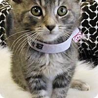 Adopt A Pet :: Brody - Lebanon, PA
