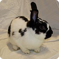 Adopt A Pet :: Camilla - Alexandria, VA
