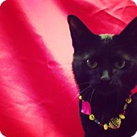 Adopt A Pet :: Rachel - Greenfield, IN