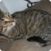 Adopt A Pet :: Stars - Dallas, TX