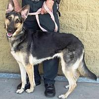 Adopt A Pet :: Sadie - Gilbert, AZ