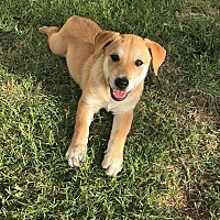 Adopt A Pet :: Abby - Flemington, NJ