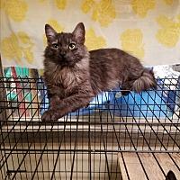 Adopt A Pet :: Amara - Fairbury, NE