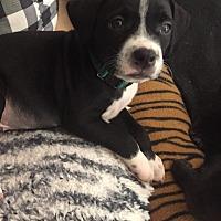 Adopt A Pet :: Bernard - Tuckerton, NJ