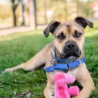 Adopt A Pet :: Marky Mark - Indianapolis, IN