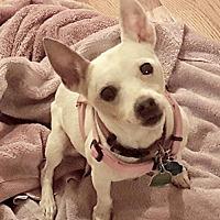 Adopt A Pet :: Babe (GA) - Atlanta, GA