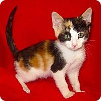 Adopt A Pet :: Arya - Lafayette, CA