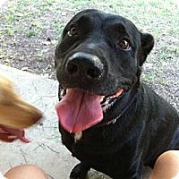 Adopt A Pet :: Storm - Rancho Cordova, CA
