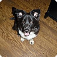 Adopt A Pet :: Rookie - Austin, TX