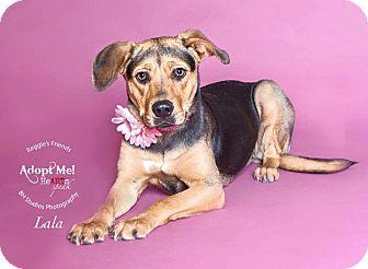 Shepherd (Unknown Type)/Hound (Unknown Type) Mix Dog for adoption in Seattle, Washington - Lala
