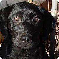 Adopt A Pet :: Char AD 04-22-17 - Preston, CT