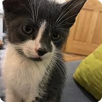 Adopt A Pet :: Duckie - Brooklyn, NY