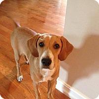 Adopt A Pet :: Sophia - Corbin, KY