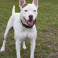 Adopt A Pet :: Blue - Warner Robins, GA