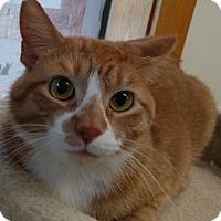 Adopt A Pet :: SammyJr. - Milwaukee, WI
