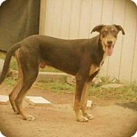 Adopt A Pet :: ZEUS 5 - Chandler, AZ