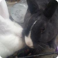 Adopt A Pet :: Ava - Lake Elsinore, CA