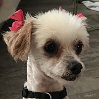Adopt A Pet :: Paulette - San Marcos, CA