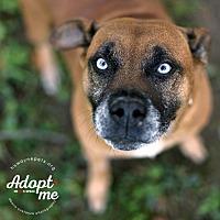 Adopt A Pet :: Roxey - Lyons, NY