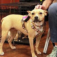 Adopt A Pet :: Cher - West Bloomfield, MI