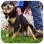 Photo 1 - Collie/Shepherd (Unknown Type) Mix Dog for adoption in Somerset, Pennsylvania - Spring