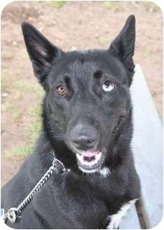 Husky Mix Dog for adoption in Islip, New York - Mona Lisa
