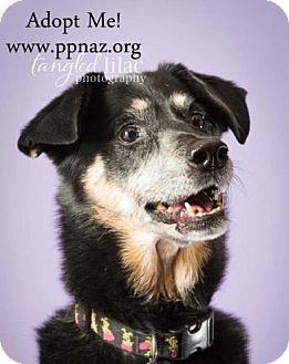 German Shepherd Dog Mix Dog for adoption in Flagstaff, Arizona - Gala