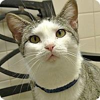 Adopt A Pet :: Friday - white settlment, TX