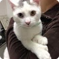 Adopt A Pet :: Sammy - Fairfield, CT