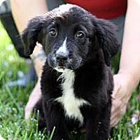 Adopt A Pet :: Annie - South Jersey, NJ