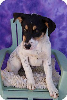 Hound (Unknown Type) Mix Puppy for adoption in Fort Lupton, Colorado - Tillie