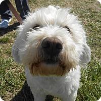Adopt A Pet :: Dawson - Lockhart, TX