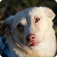 Adopt A Pet :: Higgins - Wilmington, DE