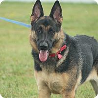 Adopt A Pet :: JOJO - Tully, NY