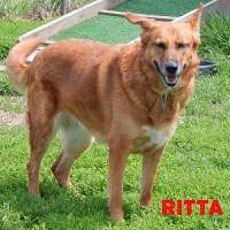 German Shepherd Dog Mix Dog for adoption in Holden, Missouri - Ritta