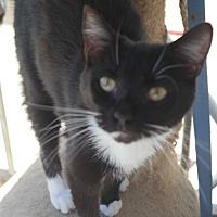 Adopt A Pet :: BILLE - San Pablo, CA