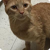 Adopt A Pet :: Olivia - Jackson, NJ