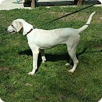 Adopt A Pet :: Spot - Livingston, TX