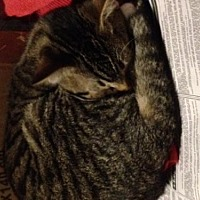 Adopt A Pet :: Rey - Lorain, OH
