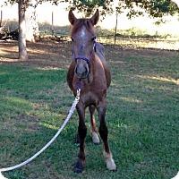 Adopt A Pet :: Argo - Oakdale, CA