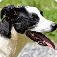 Adopt A Pet :: Lucy - Lincolnton, NC